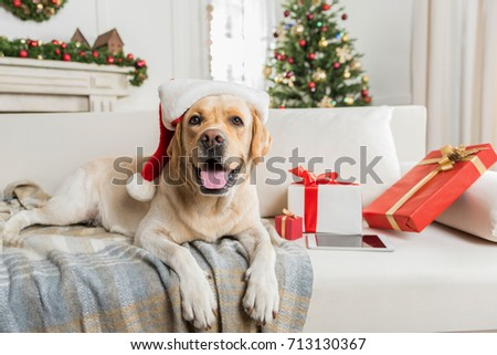 Christmas gift box with a cute dog in cap of Santa Claus isolated on white background. Sample of pos Stock photo © Lady-Luck