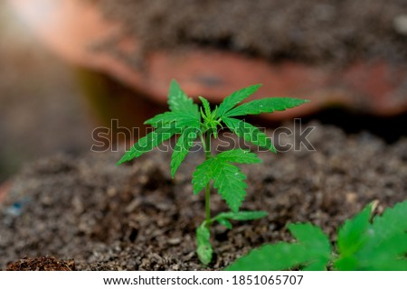 マリファナ 大麻 オブジェクト 白 医療 ストックフォト © jeremynathan