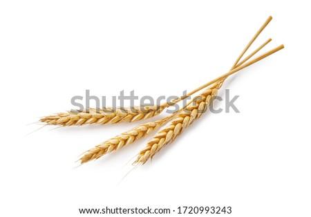 ушки · зрелый · пшеницы · солнце · небе · облака - Сток-фото © meinzahn