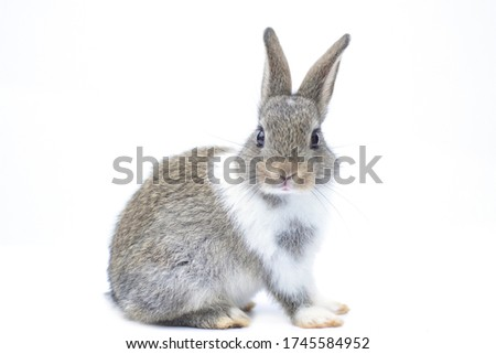 rabbit in the white background  looking  Stock photo © vauvau
