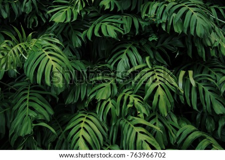 Decorative pattern with evergreen leaves of Monstera plant on a Living Coral color background. Top v Stock photo © artjazz