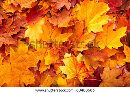 Grupo otono naranja hojas aire libre resumen Foto stock © oly5