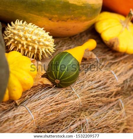 Vierkante pompoen ongebruikelijk plantaardige halloween vruchten Stockfoto © popaukropa