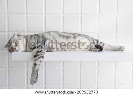 Sleeping brown cat isolated. Home pet sleeps on white background Stock photo © popaukropa