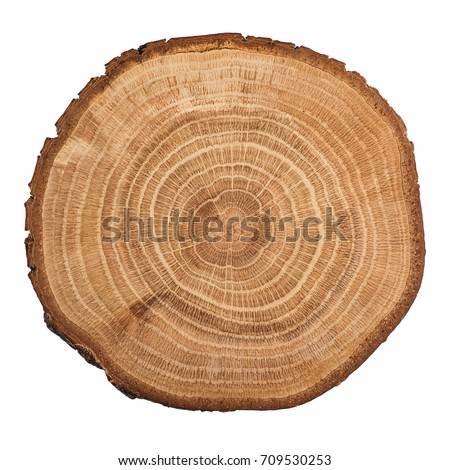 Stock photo: Tree, wooden stump with rings. Cut trees, isolated on white background.