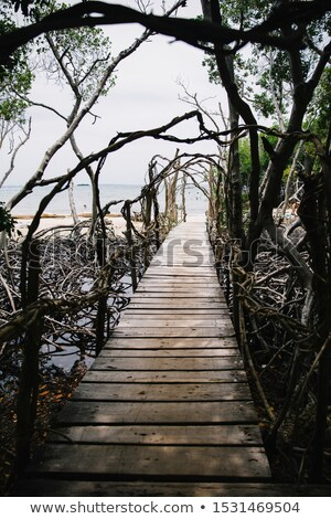 Wooden boardwalk at mangrove forest at Rosario island in Colombi Stock photo © boggy
