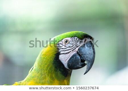 Kint fotó állatkert szafari park Spanyolország Stock fotó © amok
