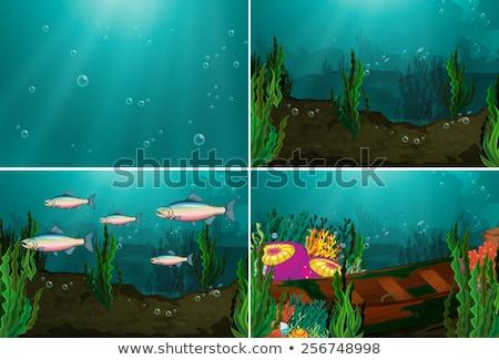 Vektör toplama dört sualtı su deniz Stok fotoğraf © glorcza