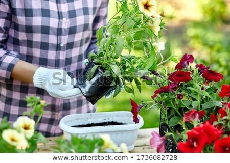 Mulher mão flores jardineiro flor Foto stock © Illia