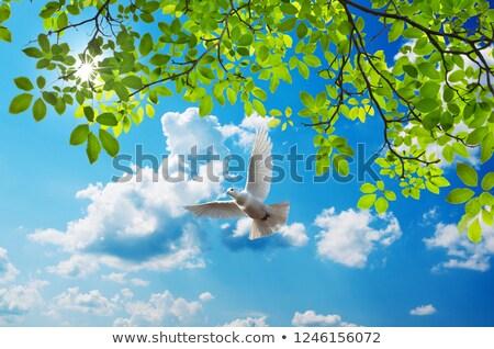 Aves voar sol pôr do sol pacífico noite Foto stock © Ansonstock