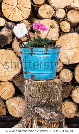 forestry still life stock photo © alphababy