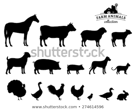 abstract animal icons silhouettes stock photo © cidepix