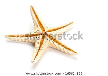 красный желтый изолированный белый морем звездой Сток-фото © tetkoren