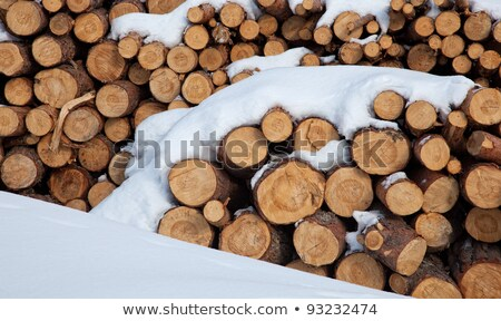 Snow log stack lumber in winter. Woodpile of pine Stock photo © hinnamsaisuy
