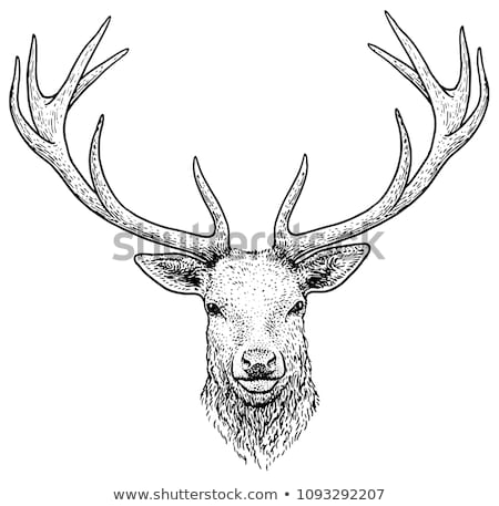 detail of red deer antlers Stock photo © taviphoto