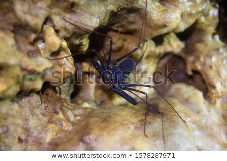 Hangyák vacsora tányér gyümölcs fekete hangya Stock fotó © Undy