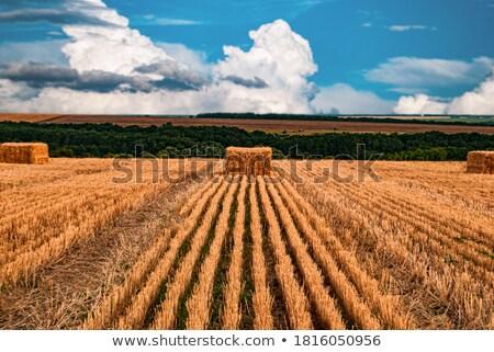 stro · zomer · landbouwer · veld · natuur - stockfoto © borysshevchuk