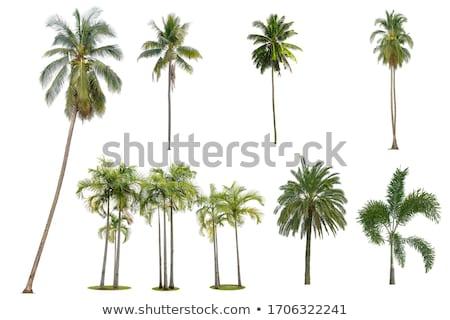 palmiye · gökyüzü · bahçeler · Sri · Lanka - stok fotoğraf © emattil