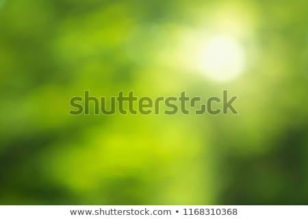 Zdjęcia stock: Treszczenie · zielony