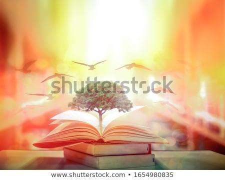Oude wijsheid boeken boek informatie Stockfoto © Stocksnapper