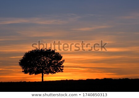 solitary tree Stock photo © mady70