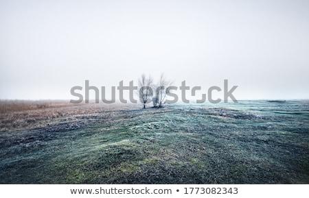 Empty fields in the autumn morning Stock photo © CaptureLight
