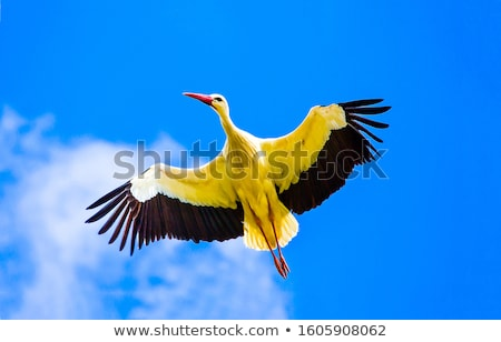 Stork Stock photo © pedrosala