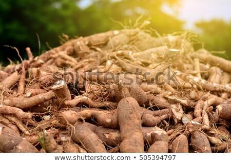 дождливый · день · урожай · солнце · природы · пейзаж - Сток-фото © smuay