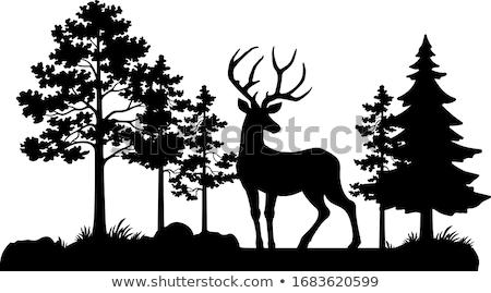 Stock photo: Deer Hunting in summer.