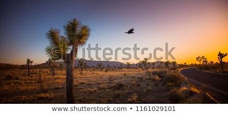 silhueta · cacto · deserto · pôr · do · sol · céu · sol - foto stock © meinzahn