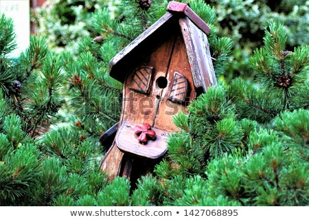 Güzel bahçe ahşap pencere kuş yeşil Stok fotoğraf © aspenrock