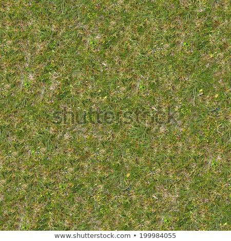 dry leaves on green grass seamless texture stock photo © tashatuvango