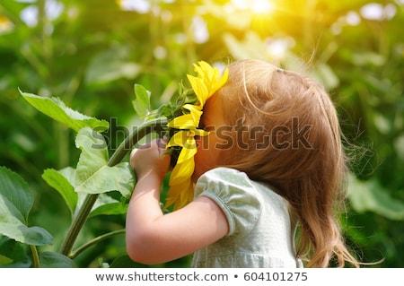 bambino · giocare · girasole · campo · sereno · estate - foto d'archivio © mikko