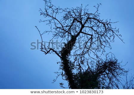 Tracery of leafless branches against a blue sky Stock photo © juniart