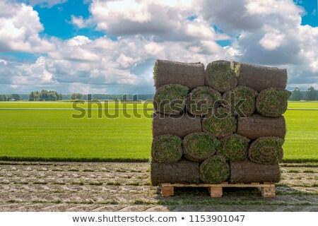 Zdjęcia stock: świeże · trawy · dywan · brud · trawnik