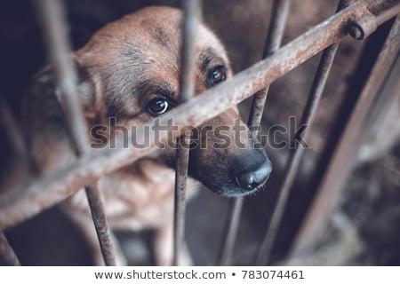 Kegyetlenség állatok kutya kezek férfi fej Stock fotó © jarin13