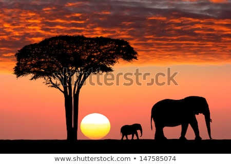 masai and child at sunset stock photo © adrenalina