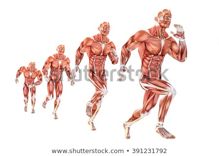 Running man anatomy. Medical illustration. Isolated. Contains clipping path Stock photo © Kirill_M