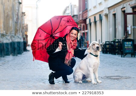 Two Street Dogs outfront a shop Stock photo © Klinker