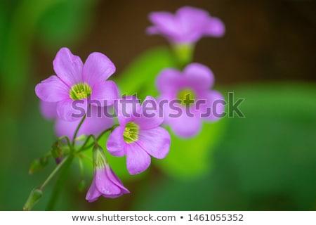 çiçekler · çiçek · su · yağmur · mavi - stok fotoğraf © lianem