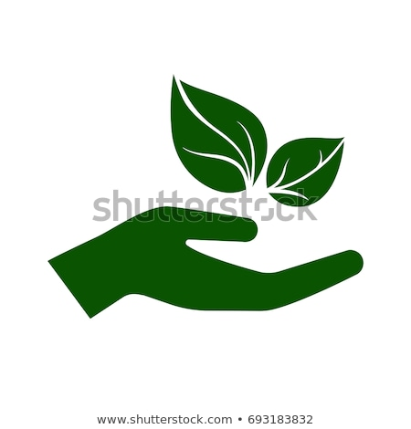 hand holding leaf icon stock photo © angelp