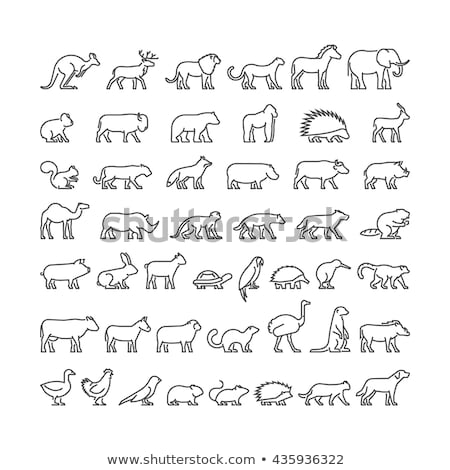 vector set of farm or domestic animals icons stock photo © curiosity