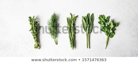taze · otlar · baharatlar · bahçe · tablo · üst - stok fotoğraf © mythja