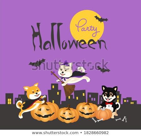 Stok fotoğraf: Mutlu · grup · köpekler · halloween · kolaj