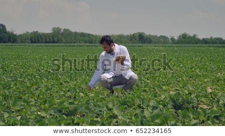 Farmer inspecting soy bean crop in field Stock photo © simazoran