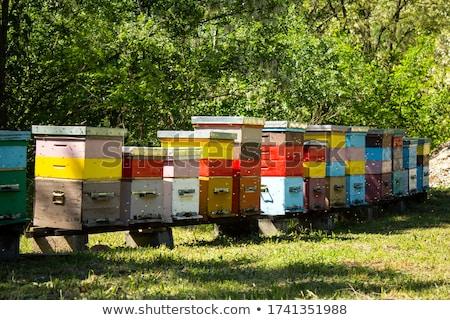 Pszczoła lasu tropikalnych żywności drzew dziedzinie Zdjęcia stock © szefei