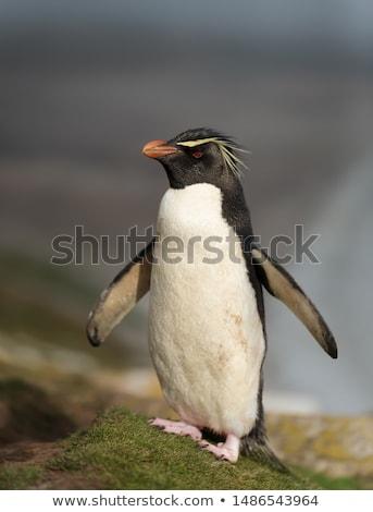 южный пингвин пляж воды океана Сток-фото © matimix