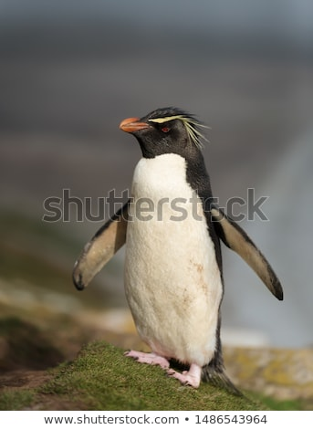 sud · pingouin · plage · eau · océan - photo stock © matimix