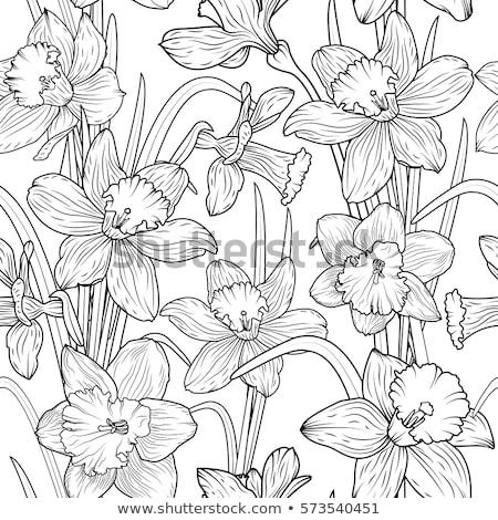 Naadloos narcis bloemen illustratie natuur achtergrond Stockfoto © colematt