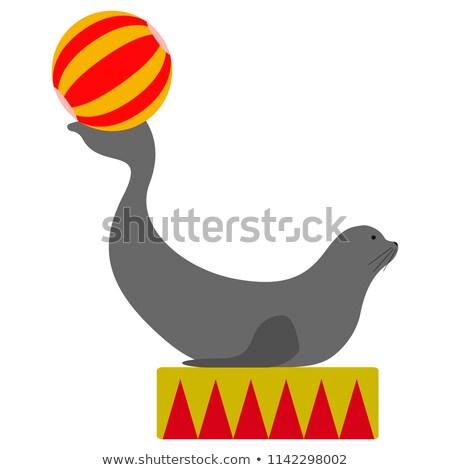 Pelliccia sigillo palla verticale immagine jumping Foto d'archivio © amok